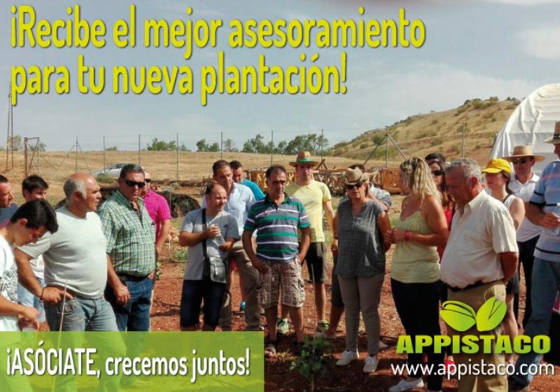 APPISTACO, el mejor asesoramiento técnico para la próxima campaña de plantación de pistacho
