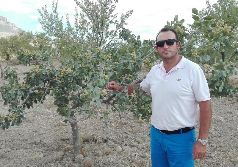 APPISTACO promueve el cultivo del pistacho en la provincia de Córdoba