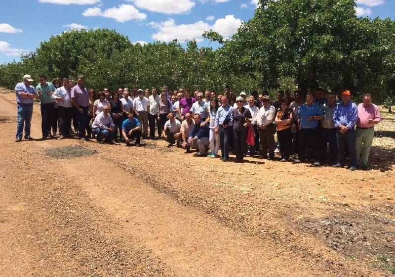 Pistacho, el cultivo que se expande en España desde Jaén