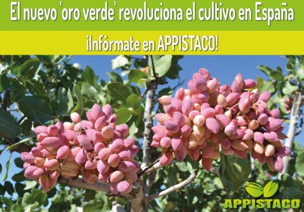 El pistacho, el nuevo 'oro verde', revoluciona el cultivo en España