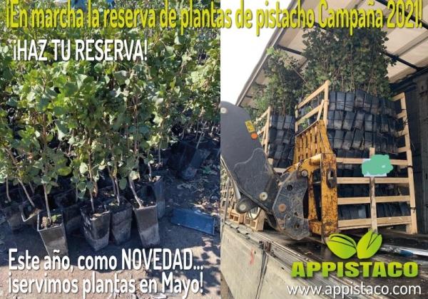 Campaña Reserva de Planta de Pistacho Injertada 2021... ¡Este año también servimos planta de pistacho en el mes de mayo!