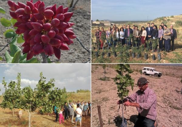 APPISTACO asesora en cultivo del pistacho en la provincia