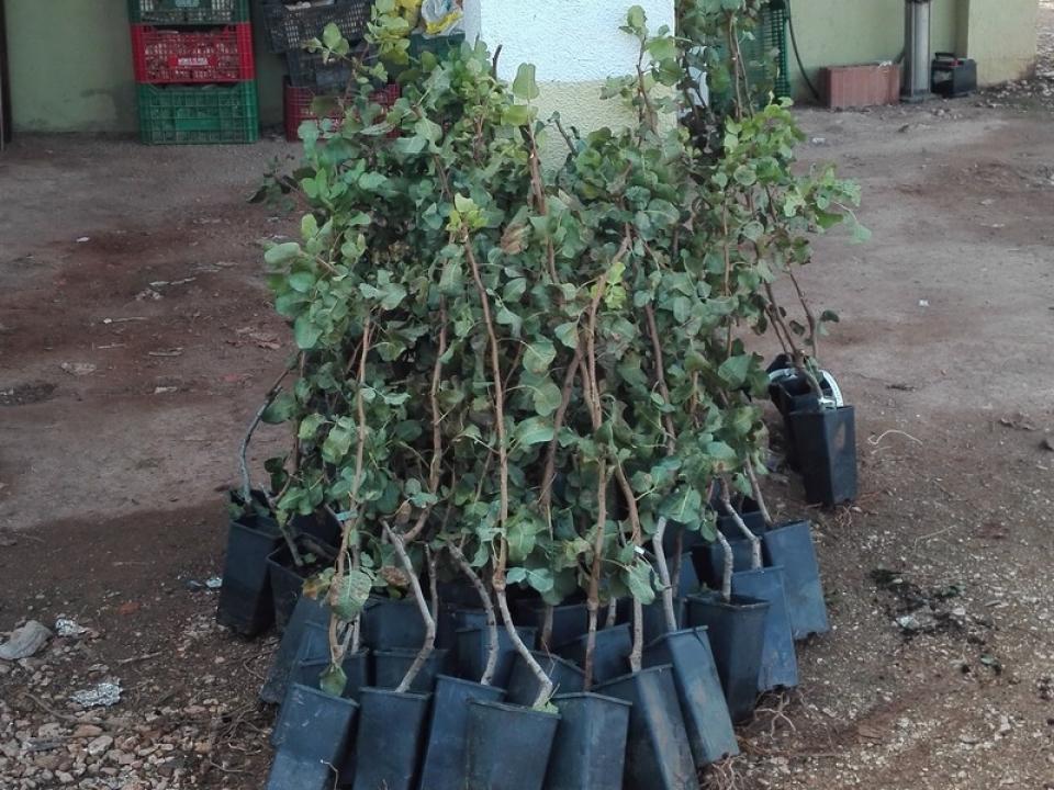 Recepción de plantas y posterior plantación